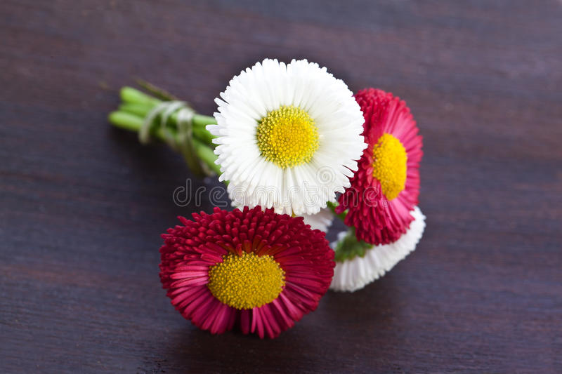 Red and white daisy flowers. Beautiful red and white daisy flowers royalty free stock images