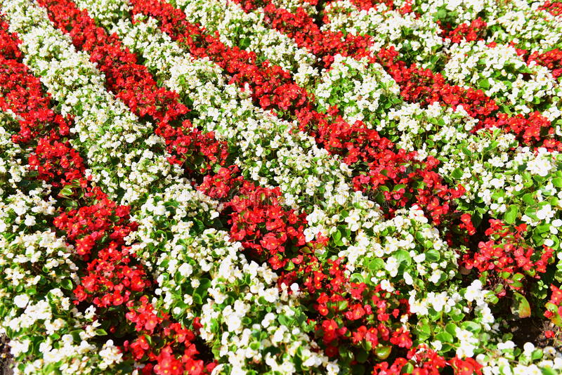 Red white flower bed stock photo image of park blossom 48474118 download red white flower bed stock photo image of park blossom 48474118 mightylinksfo
