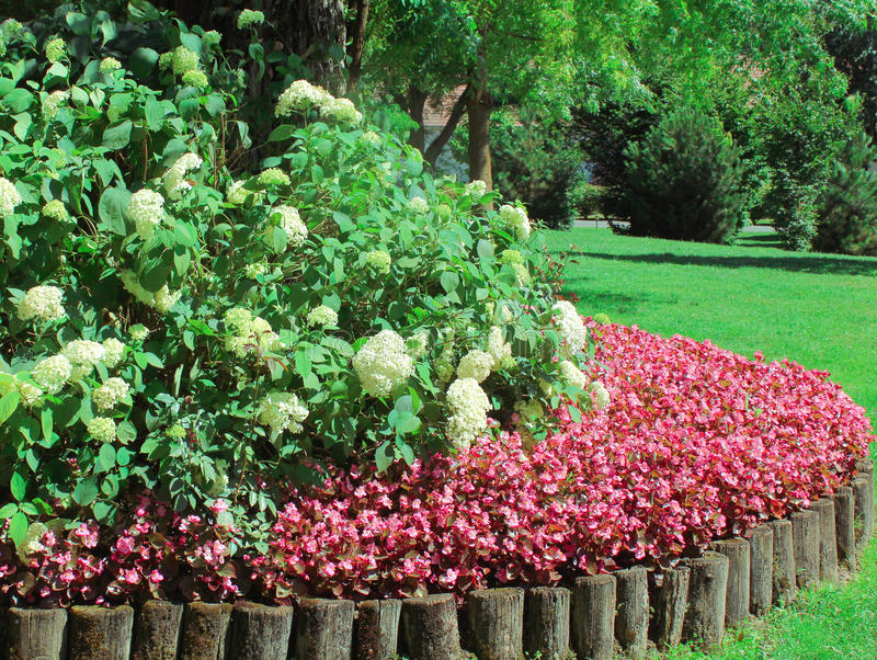 Red and White Flowers in aGarden Setting stock image