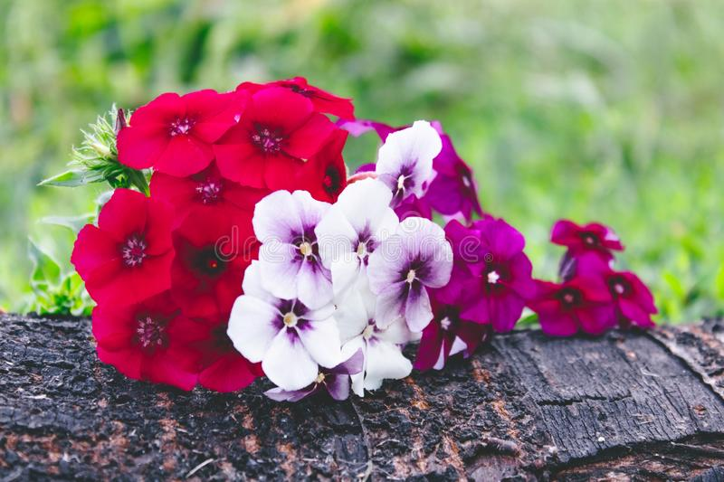 Red and white flowers lie on a tree bark on a background of green grass with a background of nature. Close-up stock photos