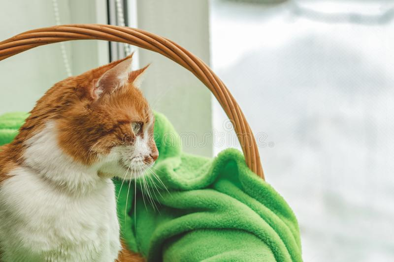 Red-and-white kitty is peaceful slumbering at the new green plaid on the windowsill. Cozy home concept. Close up. royalty free stock image