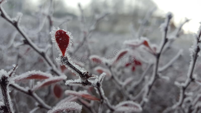 Red on white royalty free stock images