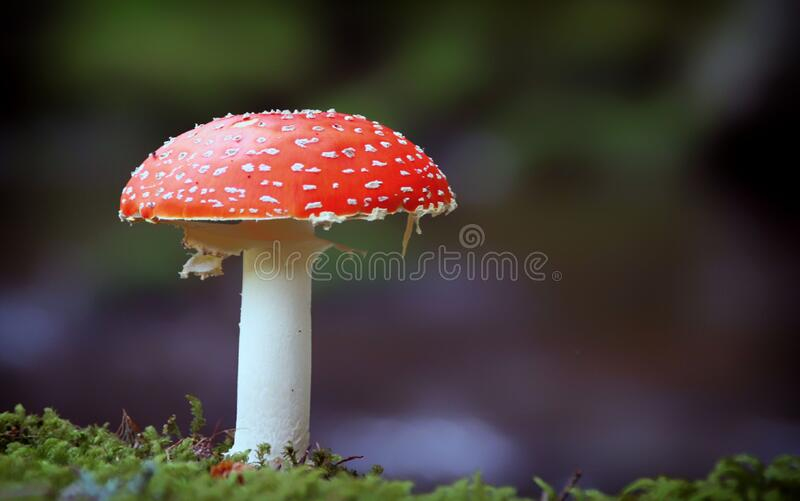 Red And White Mushroom On Green Grass During Daytime Free Public Domain Cc0 Image