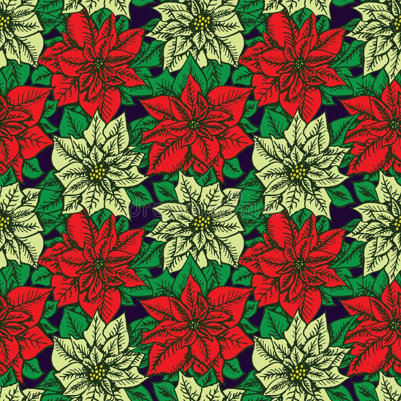 Red and white poinsettia on dark blue background stock illustration