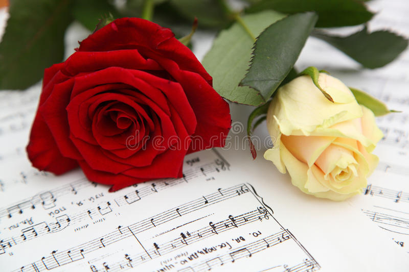 Red and white rose royalty free stock photo