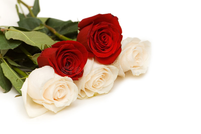 Red and white roses isolated stock image