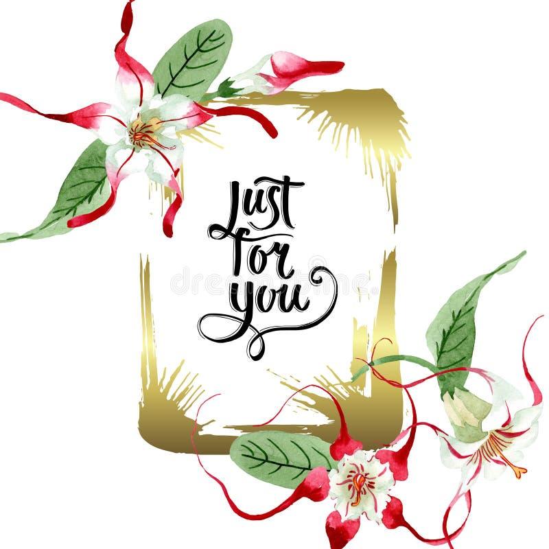 Red white strophantus botanical flowers. Wild spring leaf wildflower. Watercolour drawing fashion aquarelle isolated. Red white strophantus floral botanical stock illustration
