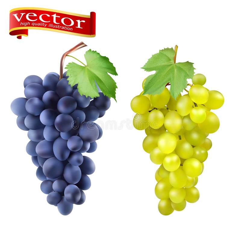 Cluster of grapes red and white 3d vector set for design. Bunch of grapes ripe, juicy, high detail vector stock illustration