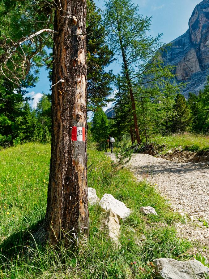 Red White Track Mark Trunk Forest Route Hiking Pathway Trail.  stock images
