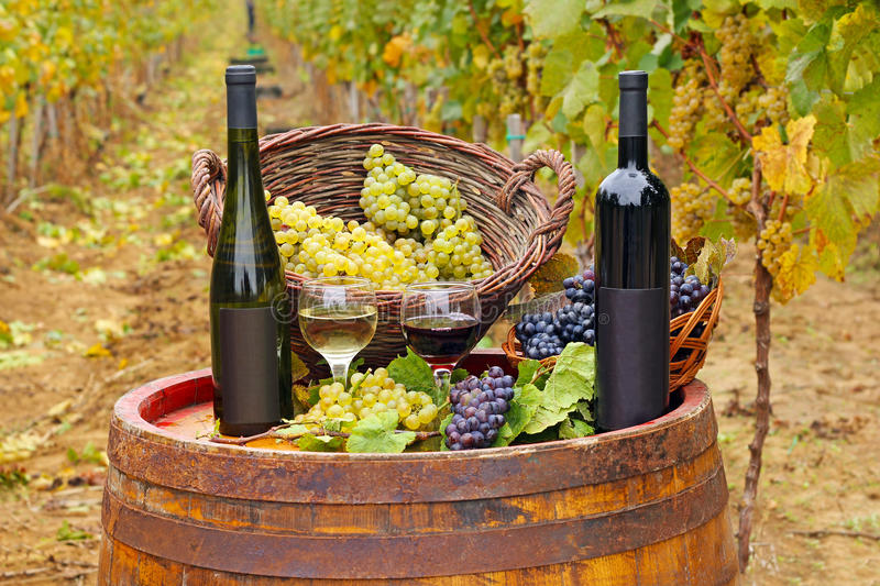 Download Red And White Wine In The Vineyard Stock Image - Image: 36175519