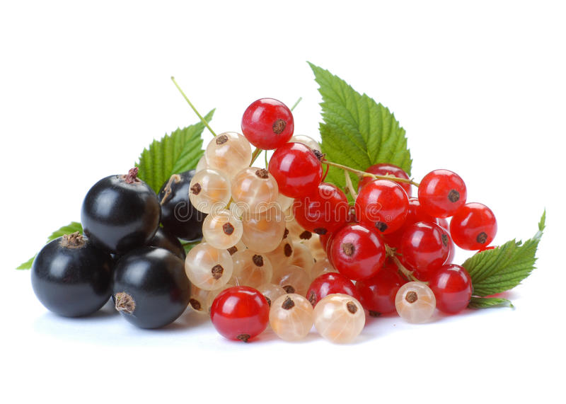 Download Red wihite black currant stock image. Image of vegetarian - 10007909