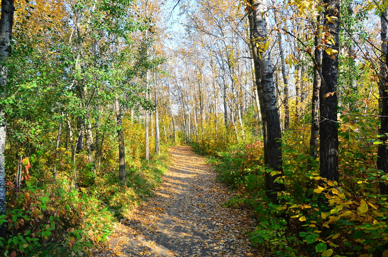 Red Willow Trail in Autumn Fall, St Albert, Alberta, Canada. Red Willow Trail adjacent to Sturgeon River in St Albert, Alberta, Canada heading towards Big Lake royalty free stock image