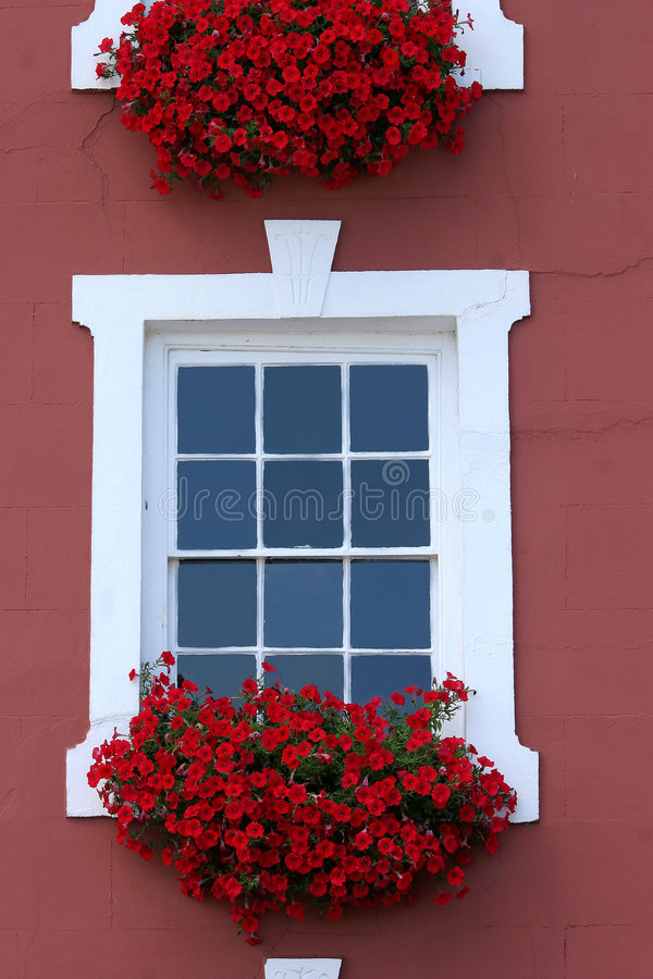 Red Window Beauty. Red flowers in window boxes beneath white windows on the front of a house