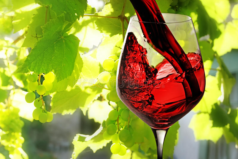 Red wine. Being poured into wineglass on background of green growing grape