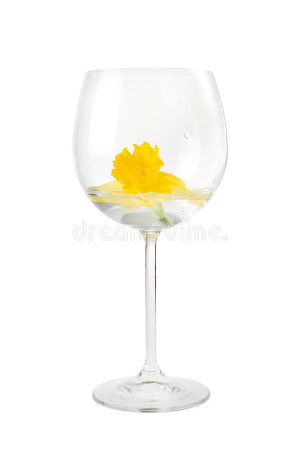 Red Wine Glass With Narcissus Flower Stock Photography