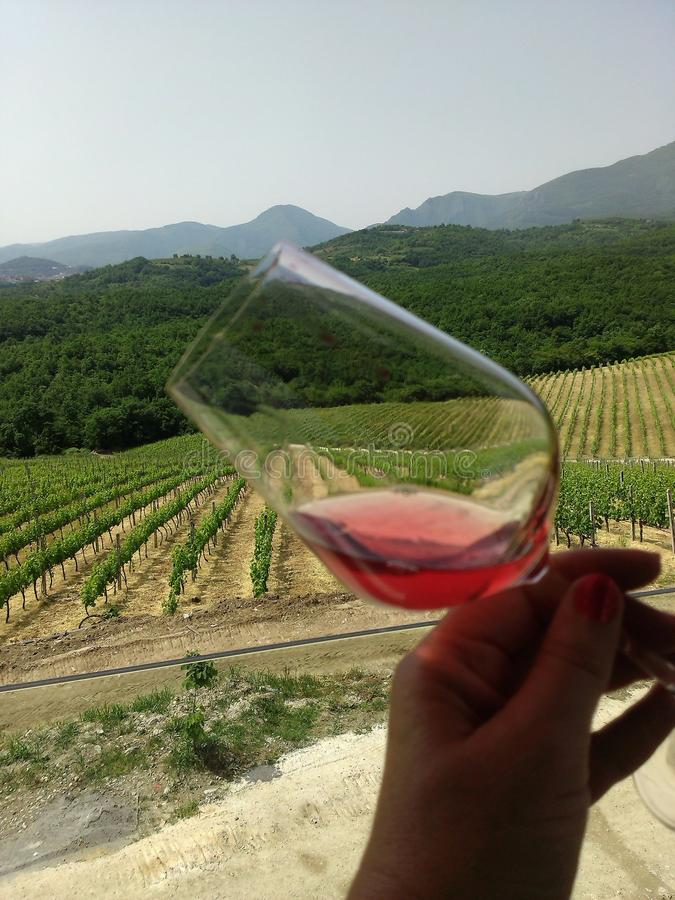 A red wine glass in the vineyards Greece stock images
