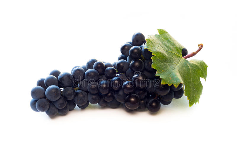 Red wine grapes royalty free stock image