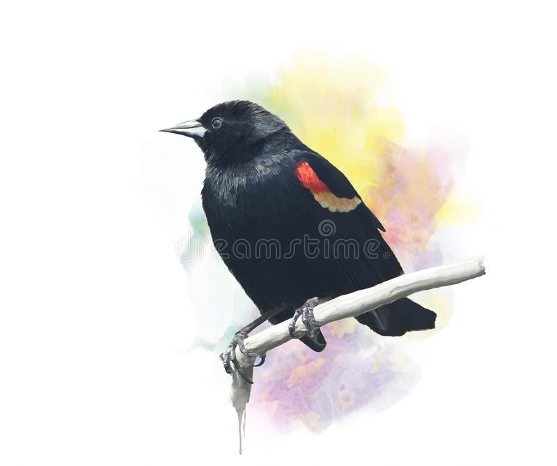 Red-Winged Merelwaterverf vector illustratie