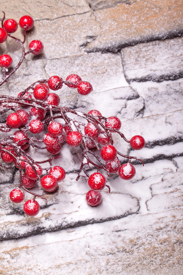 Red winter berries with powder snow royalty free stock image