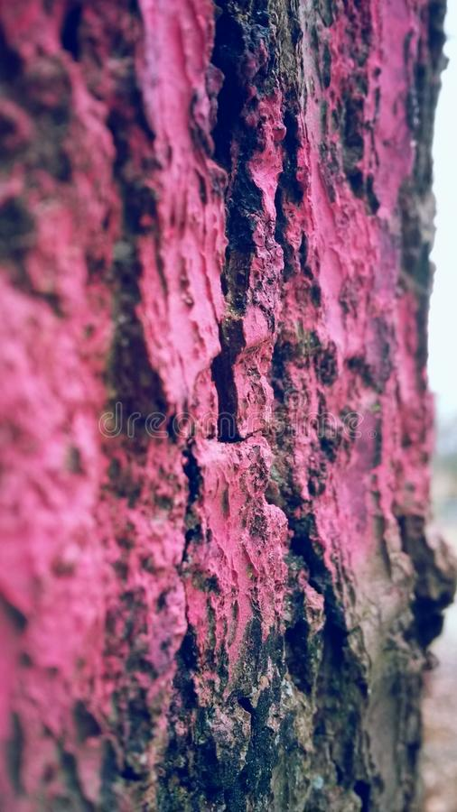 Red Wood tree royalty free stock photo