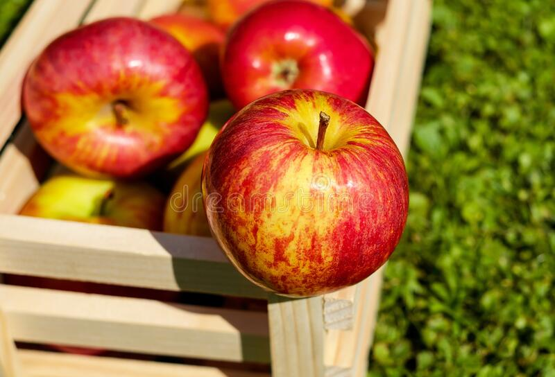 Red Yellow Apples on Wooden Basket stock photos