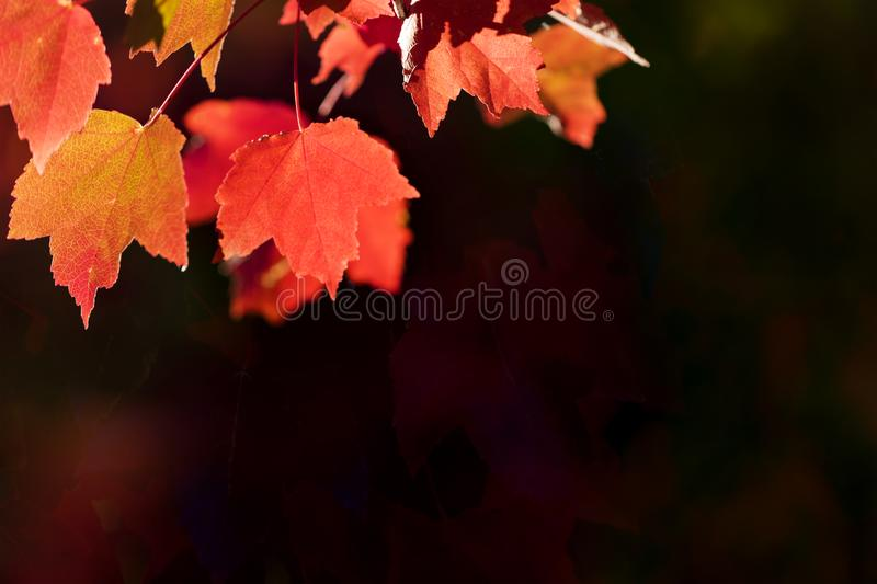 Download Autumn Leaves Background stock image. Image of fall - 115490025