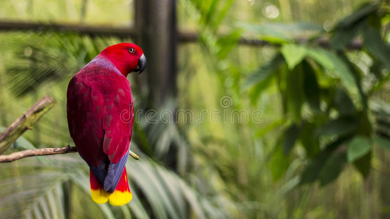 Red Yellow And Blue Parrot On Brown Bench Free Public Domain Cc0 Image