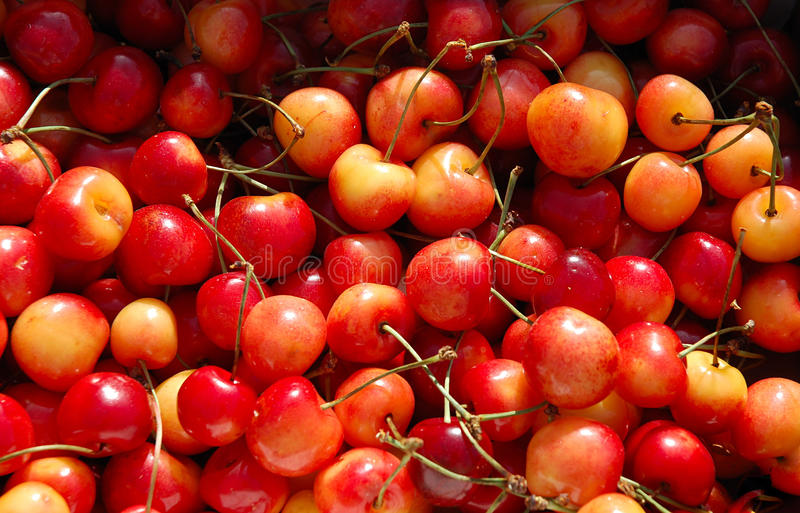 Red And Yellow Cherries Bunch Royalty Free Stock Images
