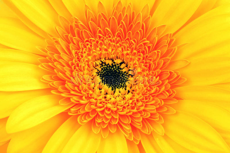 Red-yellow flower close up stock photography