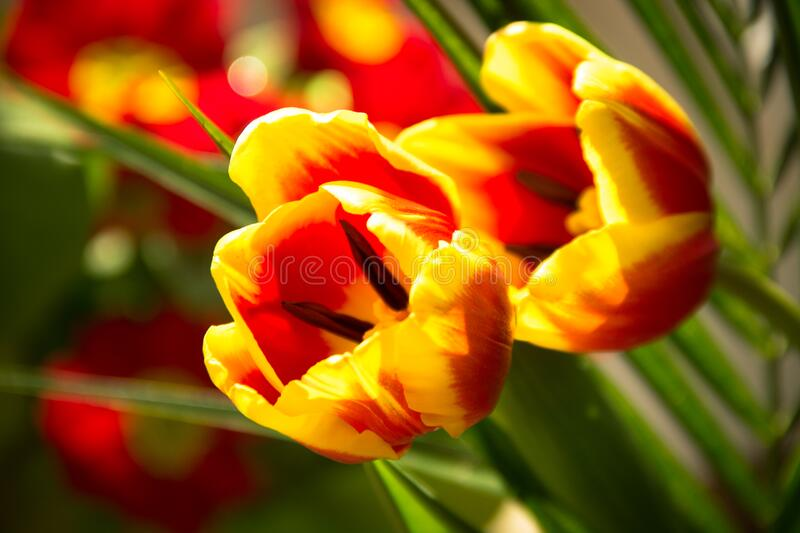Red And Yellow Flowers Free Public Domain Cc0 Image