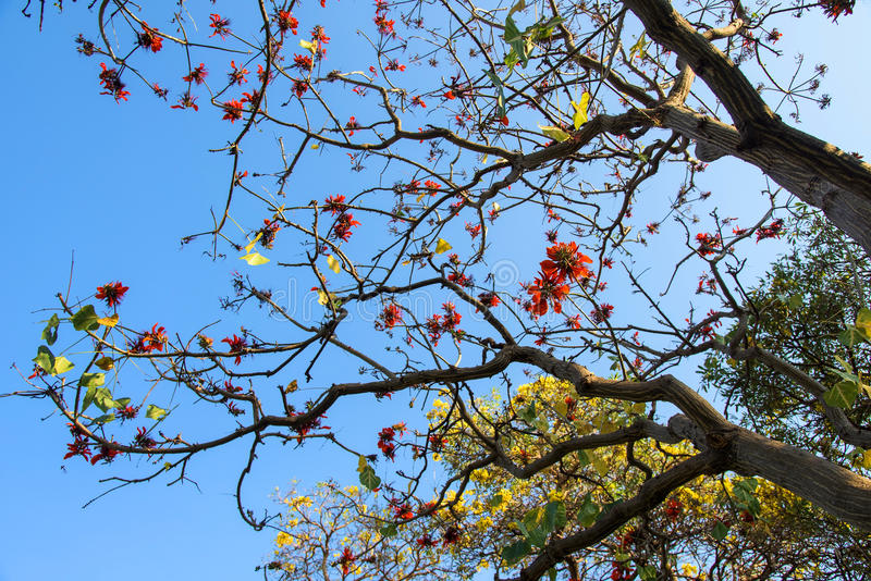 Red and yellow flowers on tree royalty free stock image
