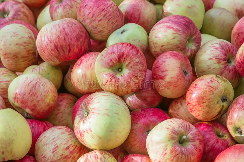 Red and Yellow Fresh Ripe Apples Background stock image