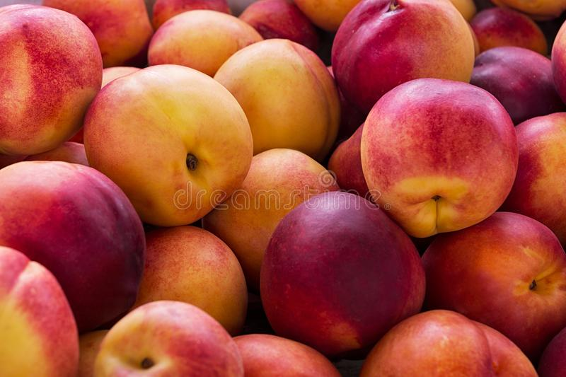 Red yellow nectarine abundance harvest background. Fresh red yellow nectarine background as abundance harvest symbol. Healthy eating concept with ripe fruits stock photos