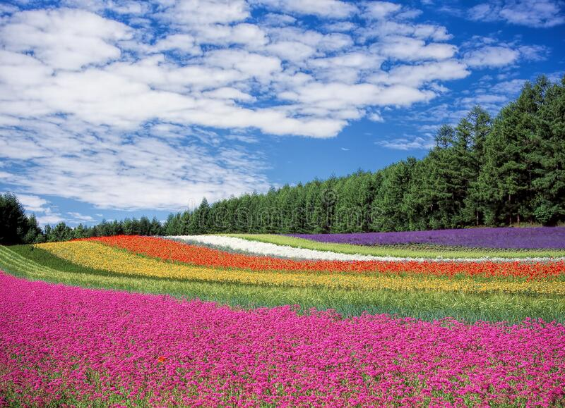 Red Yellow and Orange Flower Field stock photo