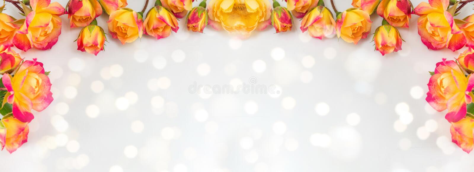 Red and yellow roses wide banner stock photography