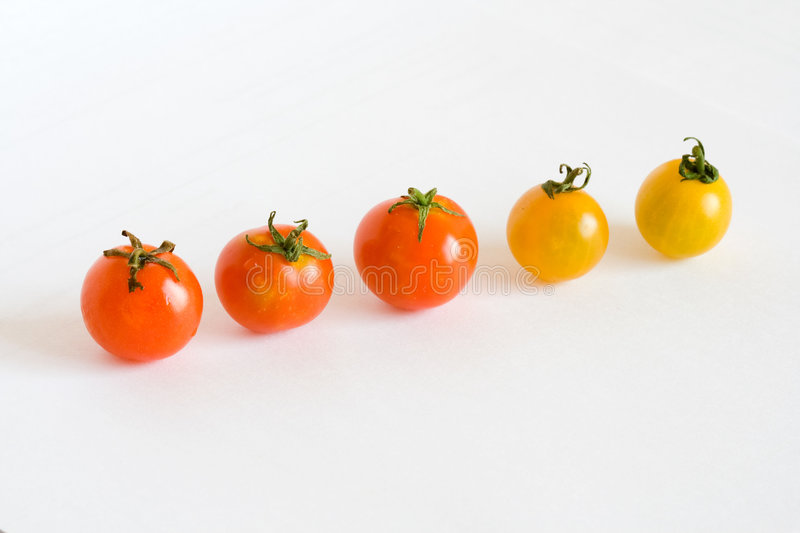 Red and yellow tomatos in row royalty free stock images