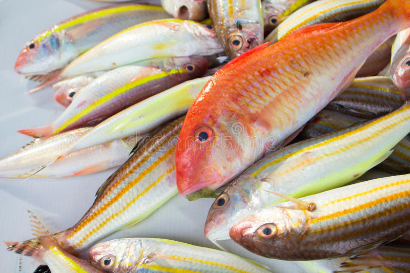 Red and yellow tropical fish catch on fish market table. royalty free stock photo