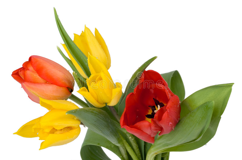 Download Red and yellow tulips stock image. Image of bouquet, floral - 8764575