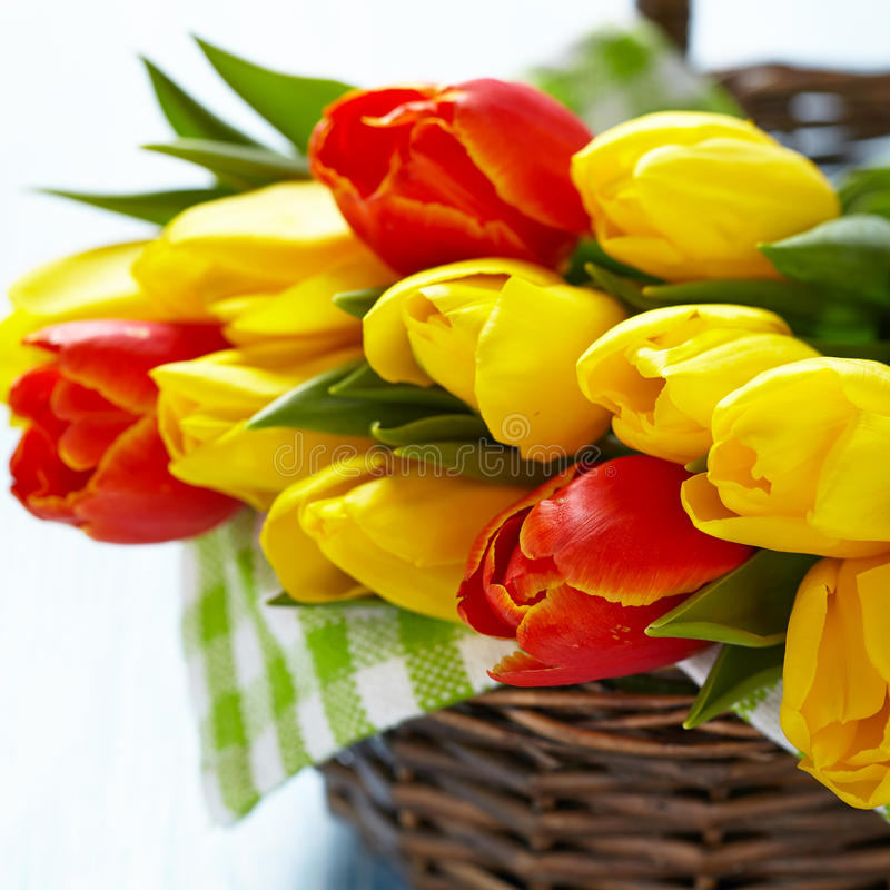Red and yellow tulips in a basket stock images