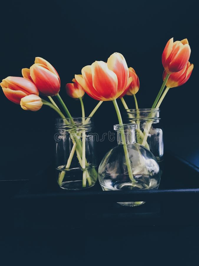 Red And Yellow Tulips In Clear Glass Jar And Vase Still Life Painting Free Public Domain Cc0 Image