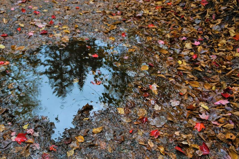 Autumn puddle royalty free stock images