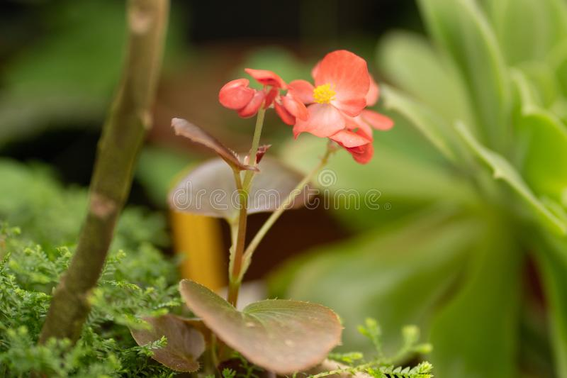Red young flower in a soft focus stock photos