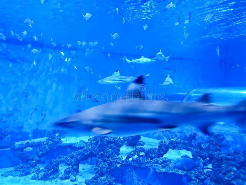 Reda波兰Aquapark -有鲨鱼和异乎寻常的鱼的水下的幻灯片管 库存图片