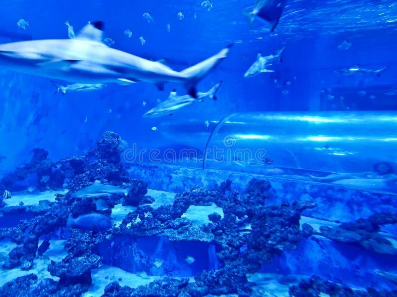 Reda波兰Aquapark -有鲨鱼和异乎寻常的鱼的水下的幻灯片管 库存照片