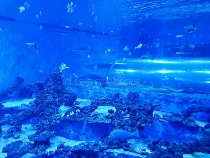 Reda Poland Aquapark - undervattens- glidbanarör med hajar och den exotiska fisken arkivbild