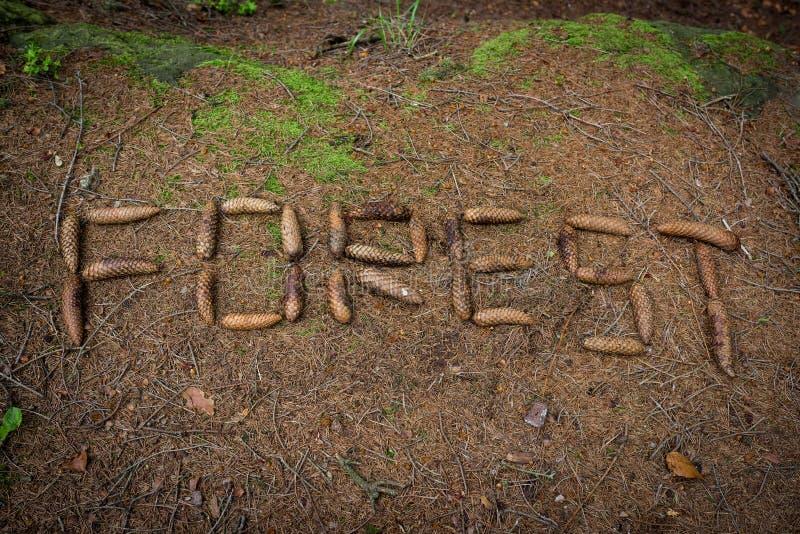 Redacte el bosque hecho por el cono en la tierra fotos de archivo libres de regalías