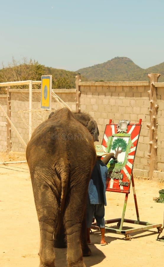 Redactie-showolifant die op de vloer in de dierentuin trekken royalty-vrije stock afbeeldingen