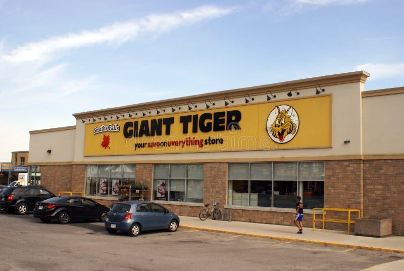 Redaktioneller Kleinschaufenster-Riese-Tiger stockbild