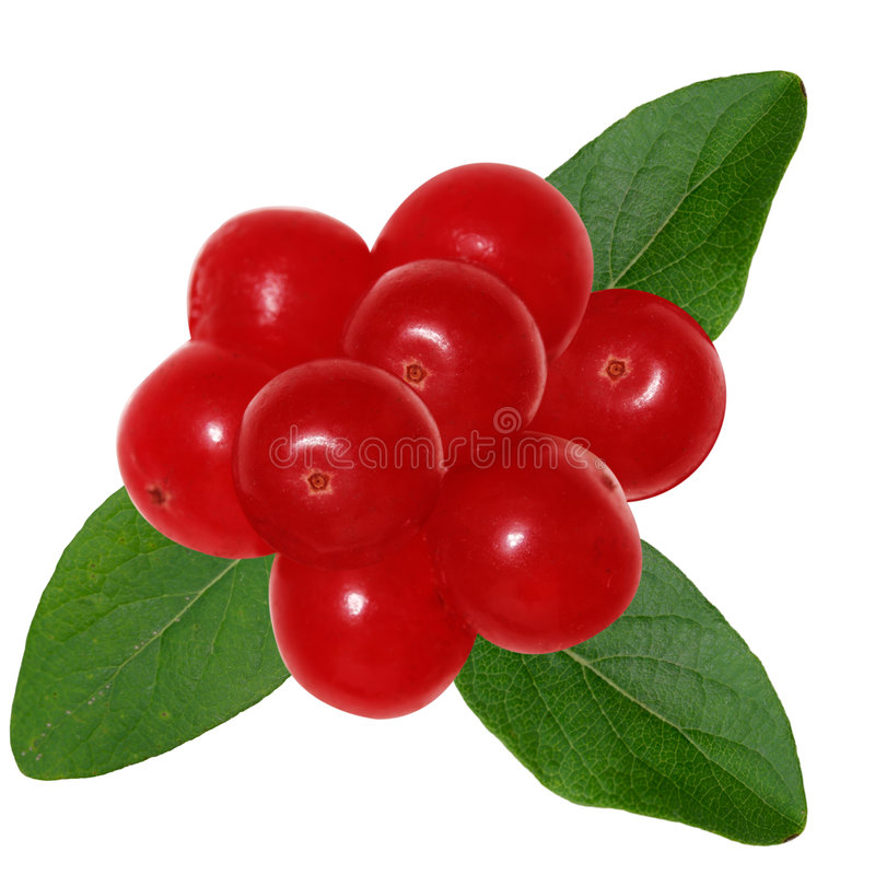 Redberry和叶子 免版税库存照片
