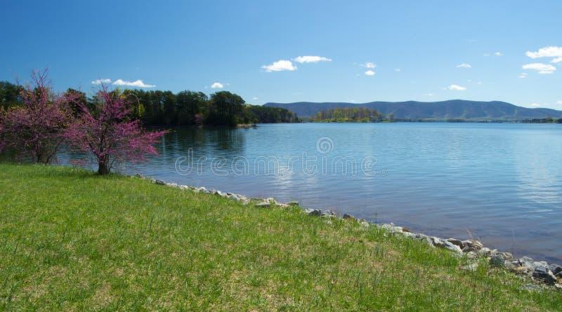 Redbud, lago e montagna immagine stock libera da diritti
